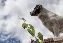 Evcil hayvan ile seyahat
